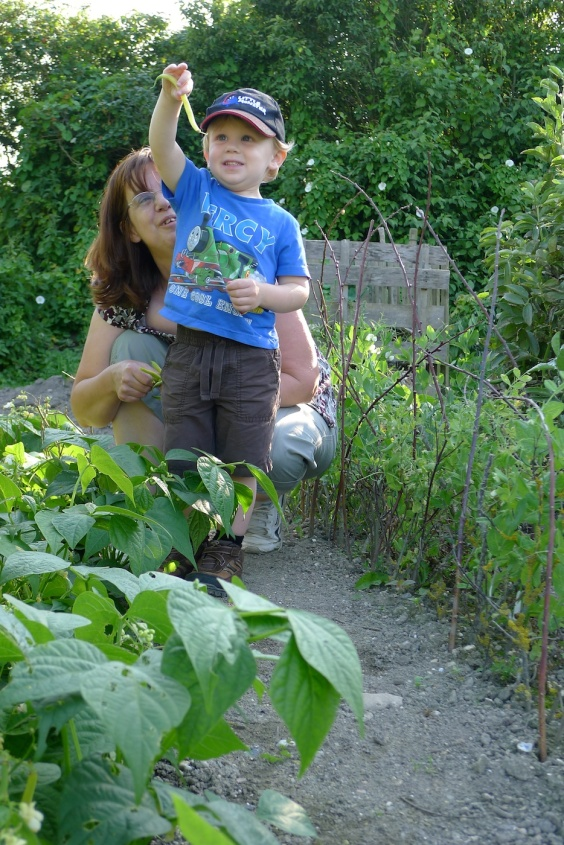 Picking beans from the allotment with Nany